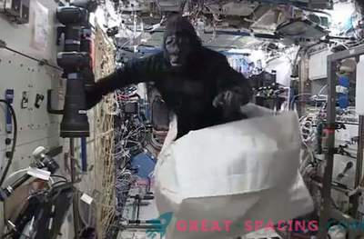 L'astronauta ha scherzato con l'aiuto di un costume da scimmia sulla stazione spaziale