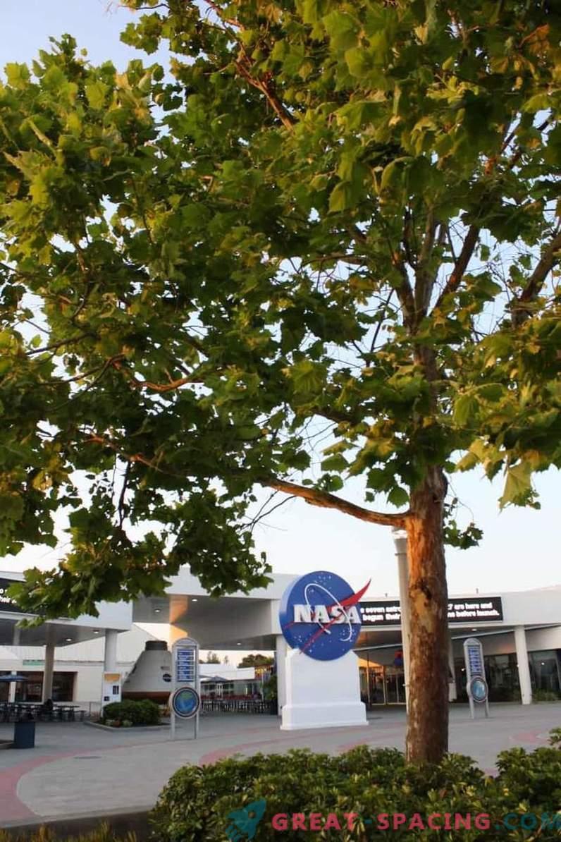 Sapevi che gli alberi lunari crescono sulla Terra
